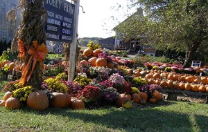 Look at those pumpkins!
