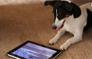 tablets for the whole family