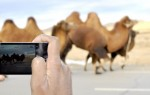clicking away in the field with a smartphone